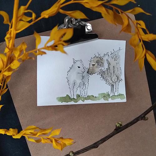 schapen lammetje nieuw leven natuur boerderij
