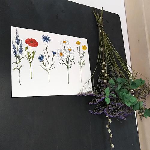 Veldbloemen botanisch tuin geur en kleur